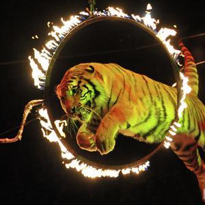 Цирки Фосфоритного