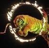 Цирки в Фосфоритном