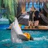 Дельфинарии, океанариумы в Фосфоритном