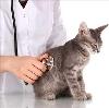 Ветеринарные клиники в Фосфоритном